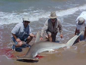 Surf light tackle surf shark f for Padre island national seashore fishing report